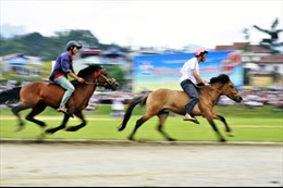 Ra mắt Câu lạc bộ Cưỡi ngựa Olympic tại tỉnh Lâm Đồng