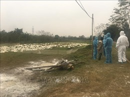 10 tỉnh, thành đã bị dịch cúm gia cầm