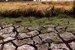 Xoay trục sản xuất nông nghiệp thích ứng với tình hình mới