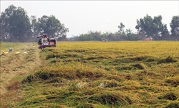 Chuyển mục đích sử dụng đất tại 2 tỉnh Vĩnh Long, Kiên Giang