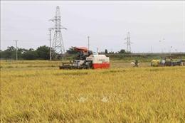 Nông dân phấn khởi vì lúa được mùa, được giá