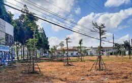 UBND tỉnh Cà Mau yêu cầu trồng lại cây xanh ở khu Trung tâm Văn hóa huyện Thới Bình