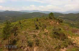 Kiểm điểm trách nhiệm người đứng đầu để xảy ra lấn chiếm đất rừng tại Lâm Hà