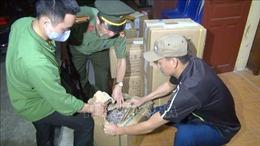 Bắt 5 đối tượng mua bán trái phép hơn 700 kg thuốc nổ