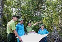 Quản lý rừng bền vững - Bài cuối: Bảo tồn và phát triển vốn rừng