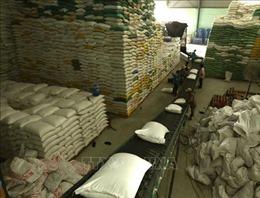 Thị trường nông sản tuần qua: Giá lúa tăng nhẹ do nguồn cung thấp