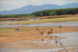 Nhiều hồ chứa ở Bà Rịa-Vũng Tàu đang ở mực nước chết
