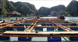 Hạ Long lập quy hoạch tái nuôi trồng thủy sản trên vịnh