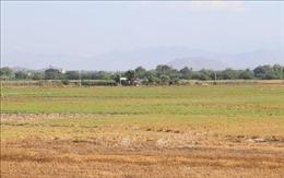 Dự kiến từ 51.000 - 70.000 ha ở Nam Trung Bộ cần điều chỉnh sản xuất do hạn hán