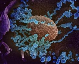 Hàn Quốc sản xuất thành công sơn kháng virus và vi khuẩn