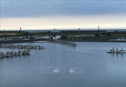 Khẩn trương xử lý dịch bệnh trên tôm nuôi nước lợ tại Phú Yên