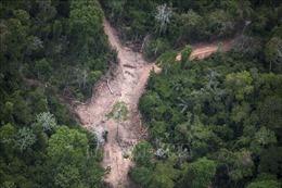 Brazil báo động về diện tích rừng Amazon bị phá