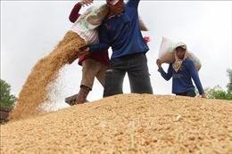 Tuần từ 15-20/6: Nhiều loại nông sản giảm giá