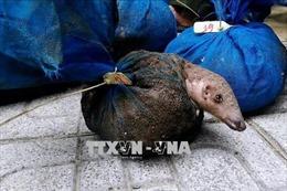 Chuỗi cung ứng động vật hoang dã làm tăng nguy cơ lây truyền virus Corona sang người