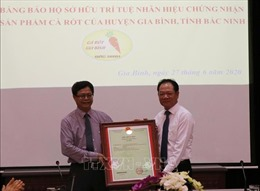 Công bố Văn bằng bảo hộ sở hữu trí tuệ cho sản phẩm Cà rốt của Bắc Ninh
