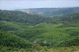 Trồng cây ngắn ngày thay thế rừng phòng hộ, đặc dụng liệu có hiệu quả?