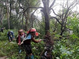 Bảo vệ và phát triển rừng ở Điện Biên - Bài 1: Chi trả dịch vụ môi trường rừng - hiệu quả '3 trong 1'