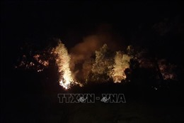 Đã dập tắt đám cháy rừng ở xã Diễn Lộc