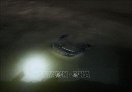 Vụ tai nạn ô tô lao xuống biển ở Hạ Long: Ba nạn nhân tử vong, một người nguy kịch