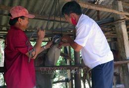 Các địa phương khẩn trương phòng chống dịch bệnh trên đàn gia súc