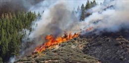 Cháy rừng nghiêm trọng tại ngoại ô thủ đô Tây Ban Nha