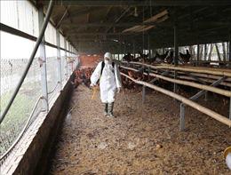 Nhiều giải pháp giám sát dịch bệnh trên đàn gia súc, gia cầm