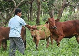 Người dân vùng sâu, vùng biên giới ở Bình Phước thoát nghèo bền vững nhờ nguồn vốn tín dụng chính sách