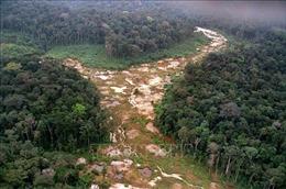 Châu Âu kêu gọi Brazil hành động chống nạn phá rừng Amazon