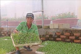 Nông dân lo ngại về thị trường tiêu thụ hoa Tết