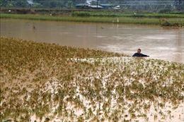 Nước lũ lên cao, Lào Cai sẵn sàng sơ tán người dân