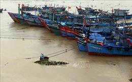 Đà Nẵng tìm kiếm, cứu hộ các tàu cá bị nạn trong mưa lớn