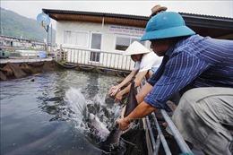 Phát triển nuôi thủy sản lòng hồ hiệu quả, bền vững, hướng tới sản phẩm OCOP