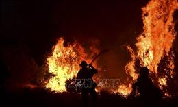 Cảnh báo nguy cơ cháy rừng khắp bang California