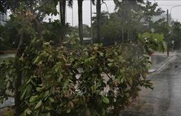 Phú Yên mưa rất to, nhiều cây xanh ngã đổ, 38 xã mất điện