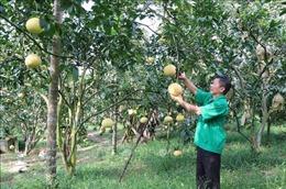 Thái Nguyên có hơn 75% số xã đạt chuẩn nông thôn mới