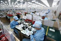 Chuẩn bị thí điểm thành lập các khu công nghiệp điện tử