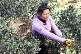 Trồng cây ăn quả trên đất dốc cho thu nhập hàng trăm triệu đồng mỗi năm