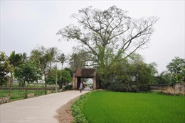 Hà Nội: Kỷ niệm 15 năm Làng cổ Đường Lâm được công nhận là di tích quốc gia