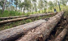Khởi tố vụ án hủy hoại rừng phòng hộ đầu nguồn Lâm Đồng
