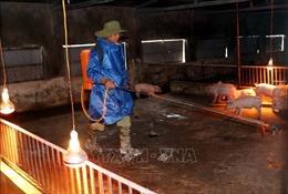 Hà Tĩnh tập trung phòng, chống dịch tả lợn châu Phi