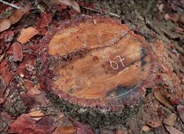 Kiểm tra, xác minh phản ánh vùng lõi rừng đặc dụng Mường Phăng bị 'rút ruột'