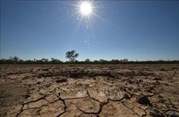 Hơn 1.700 vụ kiện liên quan đến biến đổi khí hậu trong năm 2020