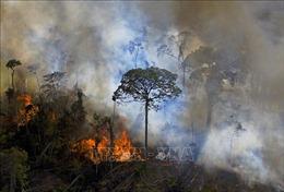 Brazil vừa trải qua năm có số vụ cháy rừng nhiều nhất thập kỷ