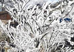 Xuất hiện băng giá ở các xã vùng cao huyện Bắc Yên, Sơn La