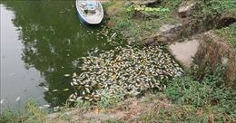 Cá chết trong công viên văn hóa Thanh Lễ được xả ra kênh Bưng Cải