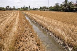 Ứng phó với biến đổi khí hậu, hướng đến phát triển kinh tế xanh