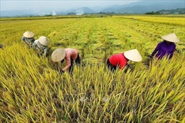 Xây dựng một nền nông nghiệp thông minh, hiện đại