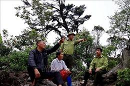 Người Mông ở Hòa Bình giữ rừng nguyên sinh để phát triển du lịch bền vững