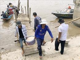 Ngư dân trúng đậm mùa ruốc đầu năm