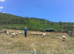 Những thanh niên 9x rời phố về quê khởi nghiệp từ nông nghiệp sạch
